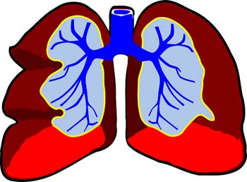 lungs-2